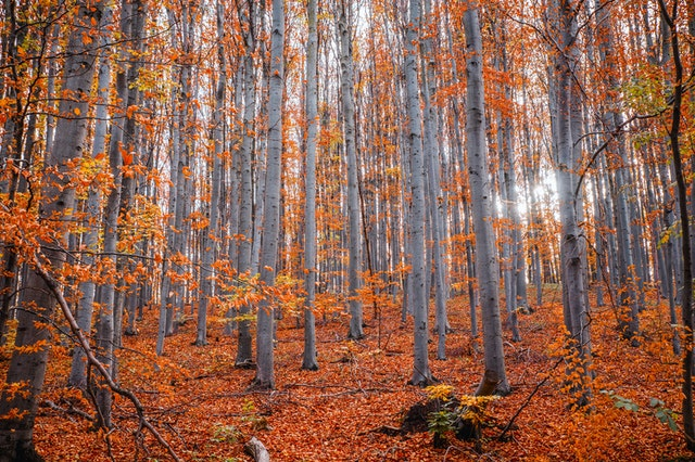 fall scene birch trees in quinte area real estate fall market outlook 2021